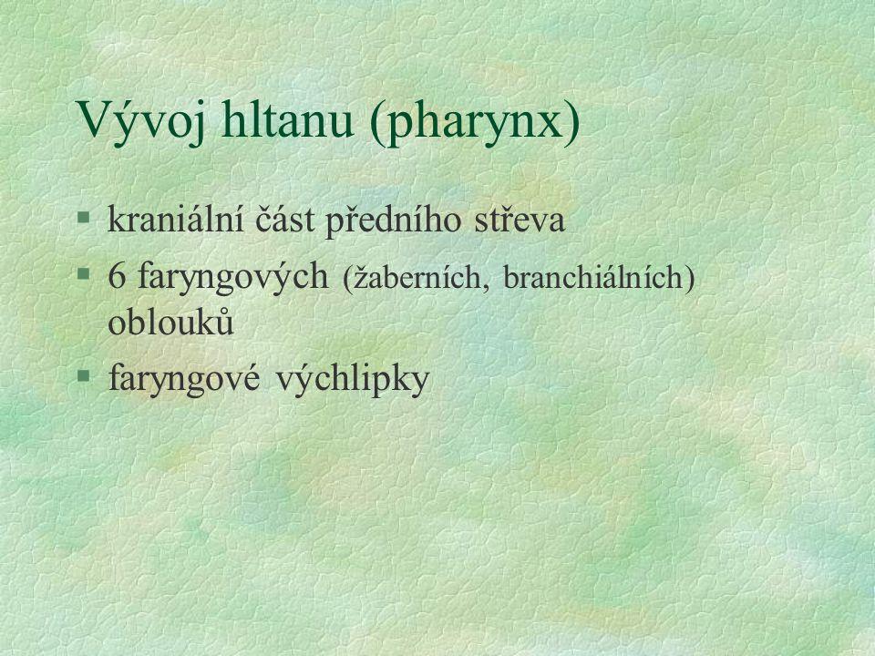 Vývoj hltanu (pharynx)