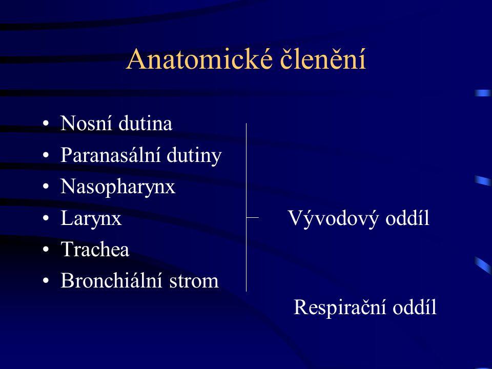 Anatomické členění Nosní dutina Paranasální dutiny Nasopharynx