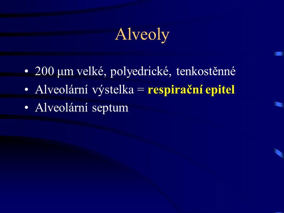 Alveoly 200 μm velké, polyedrické, tenkostěnné