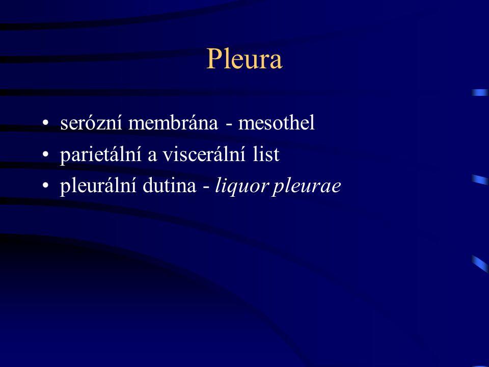 Pleura serózní membrána - mesothel parietální a viscerální list