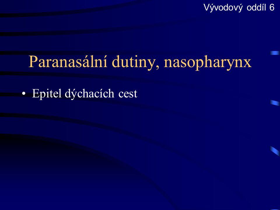Paranasální dutiny, nasopharynx