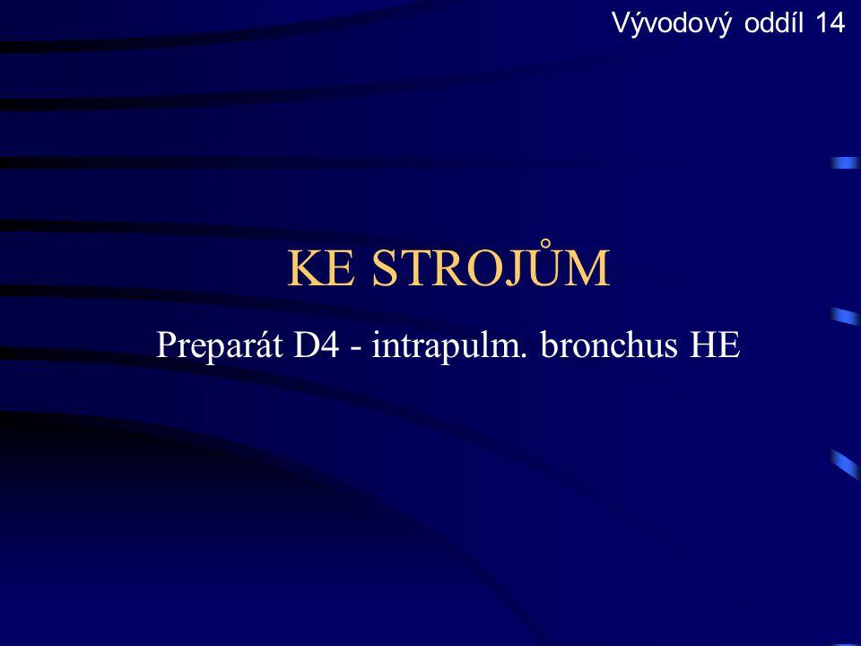 Preparát D4 - intrapulm. bronchus HE