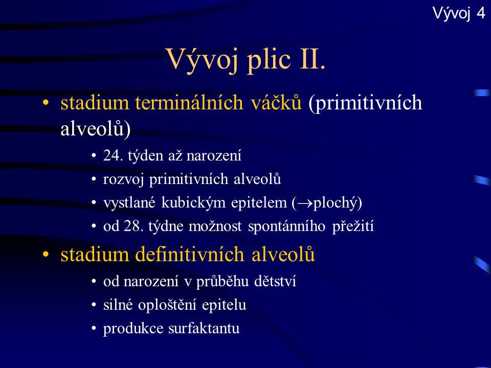 Vývoj plic II. stadium terminálních váčků (primitivních alveolů)