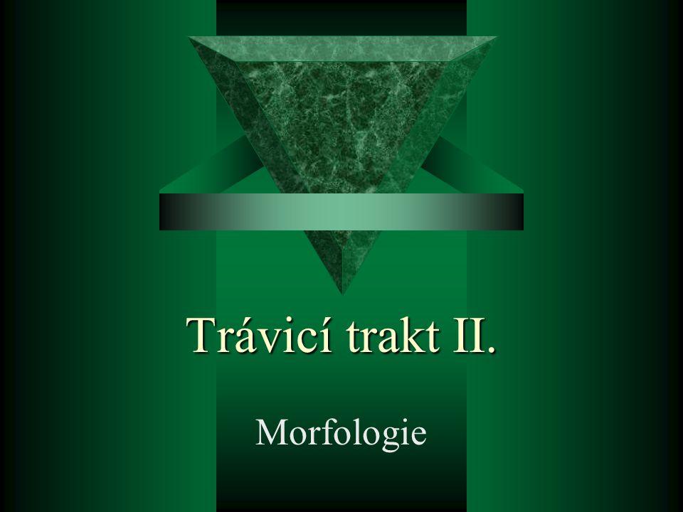 Trávicí trakt II. Morfologie