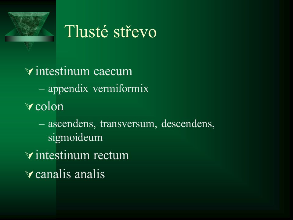 Tlusté střevo intestinum caecum colon intestinum rectum canalis analis