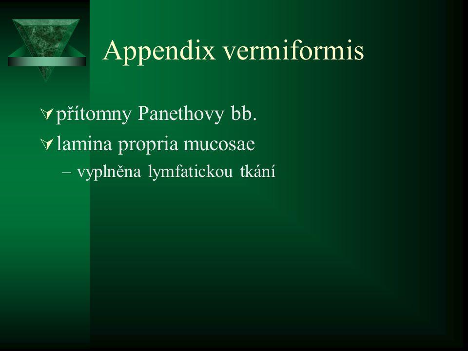 Appendix vermiformis přítomny Panethovy bb. lamina propria mucosae
