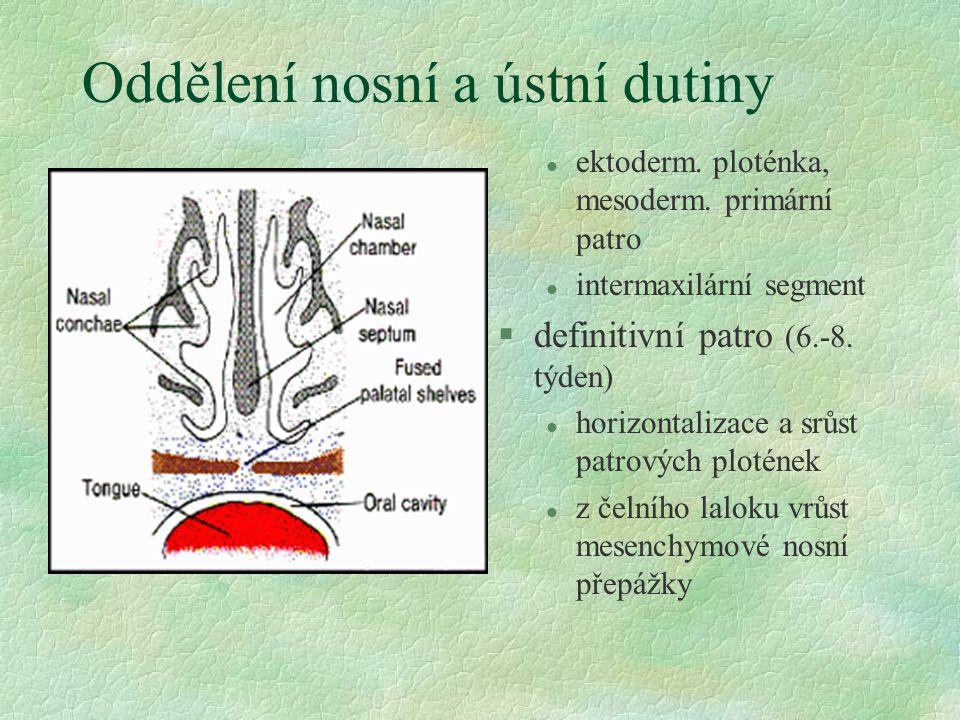 Oddělení nosní a ústní dutiny