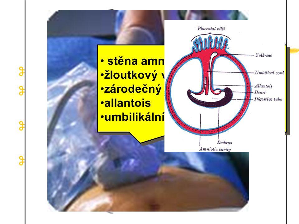 Amniová dutina strop tvořen jednovrstevným epitelem