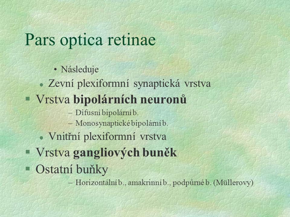Pars optica retinae Vrstva bipolárních neuronů