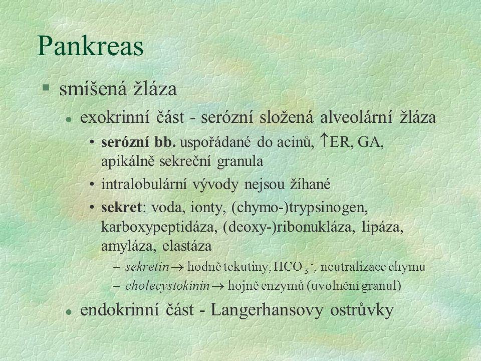 Pankreas smíšená žláza