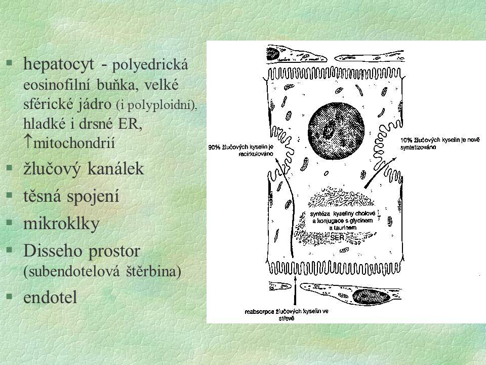 hepatocyt - polyedrická eosinofilní buňka, velké sférické jádro (i polyploidní), hladké i drsné ER, mitochondrií
