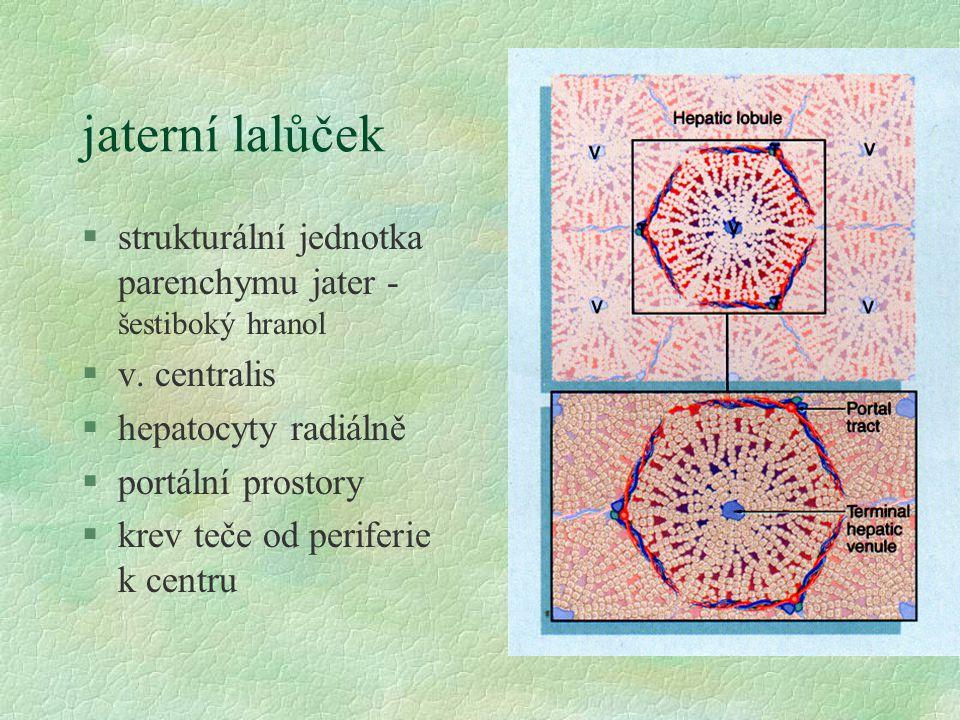 jaterní lalůček strukturální jednotka parenchymu jater - šestiboký hranol. v. centralis. hepatocyty radiálně.
