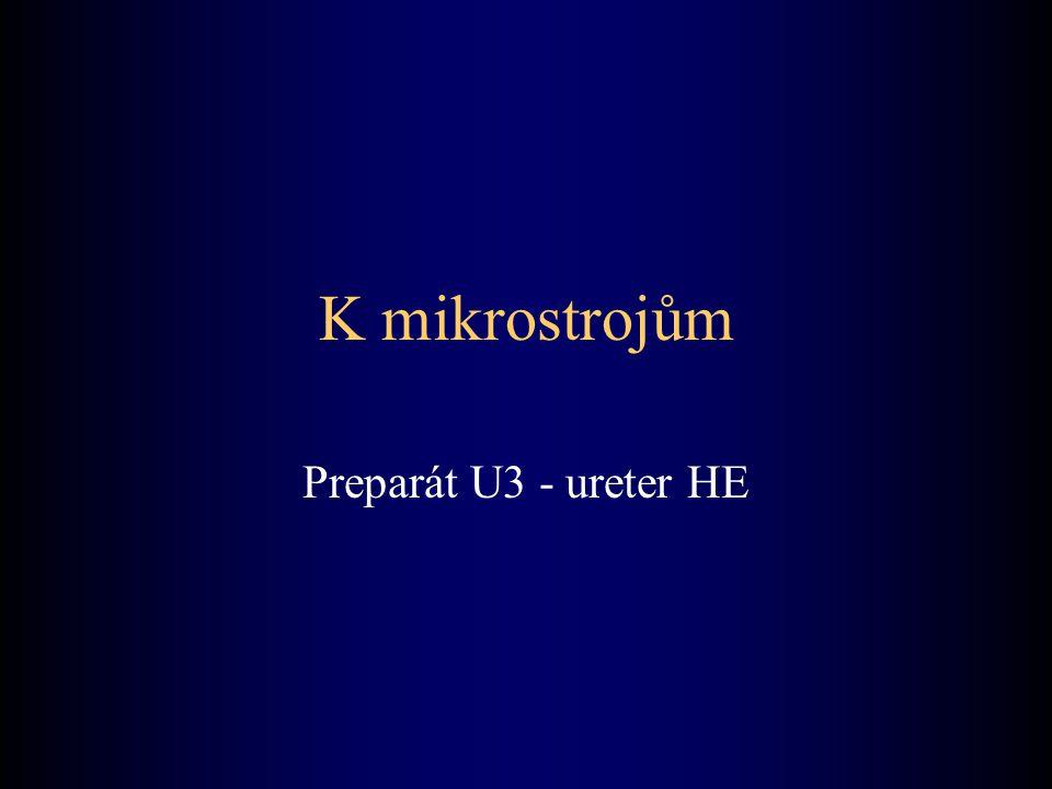 K mikrostrojům Preparát U3 - ureter HE