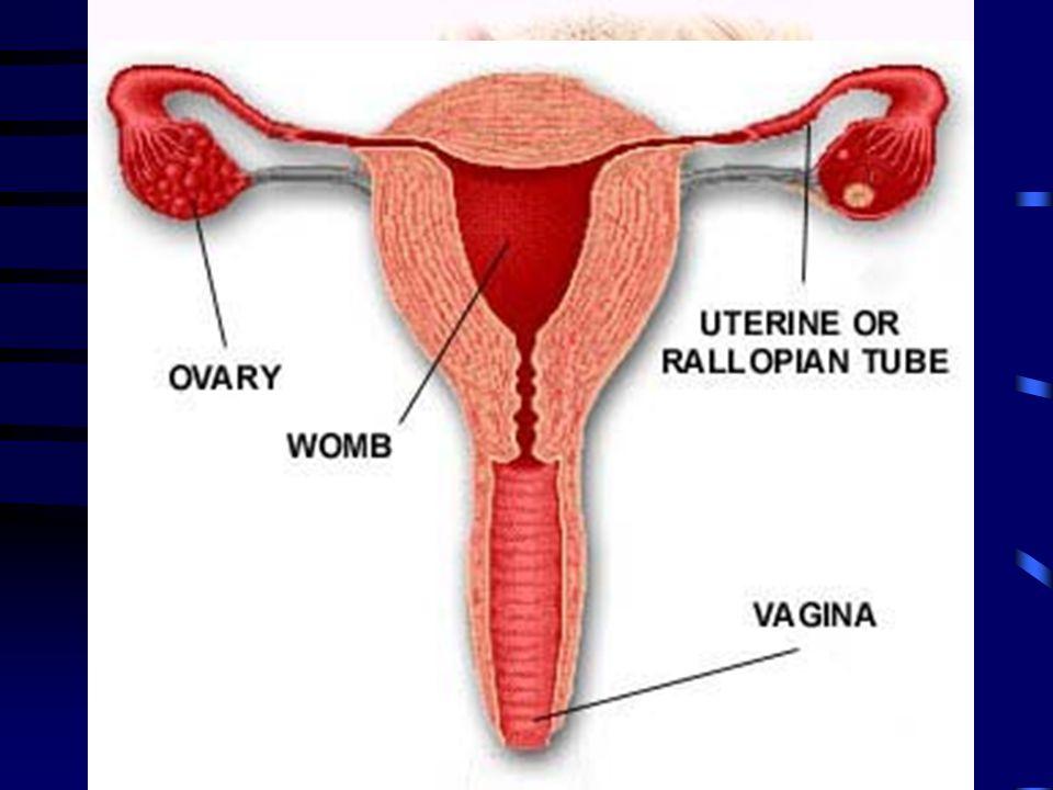 Ženský pohlavní systém