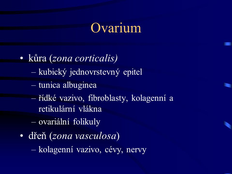 Ovarium kůra (zona corticalis) dřeň (zona vasculosa)