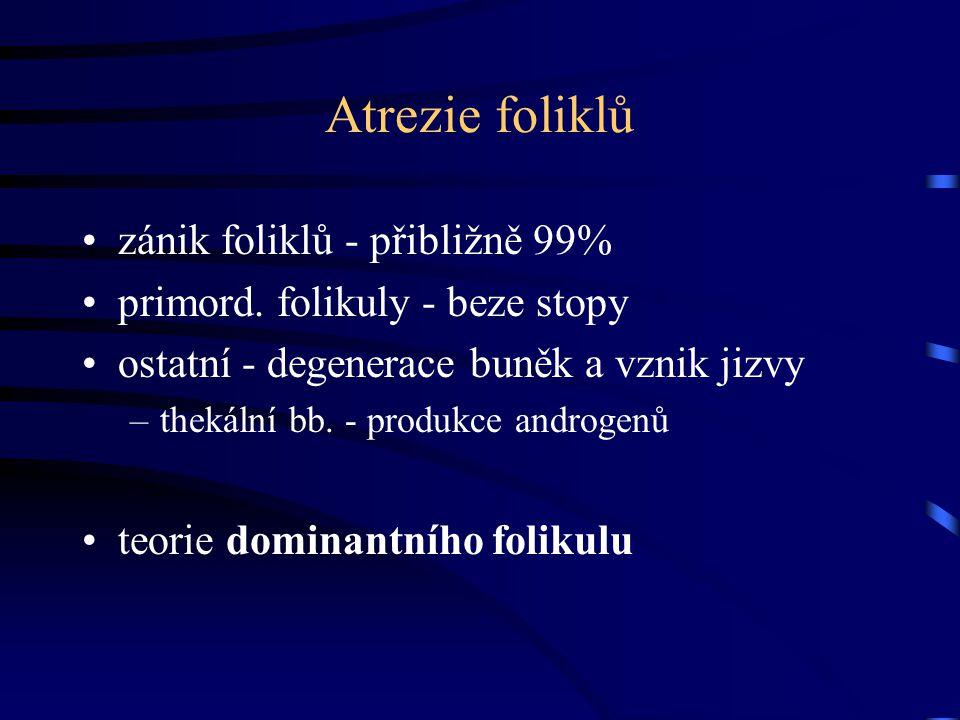 Atrezie foliklů zánik foliklů - přibližně 99%