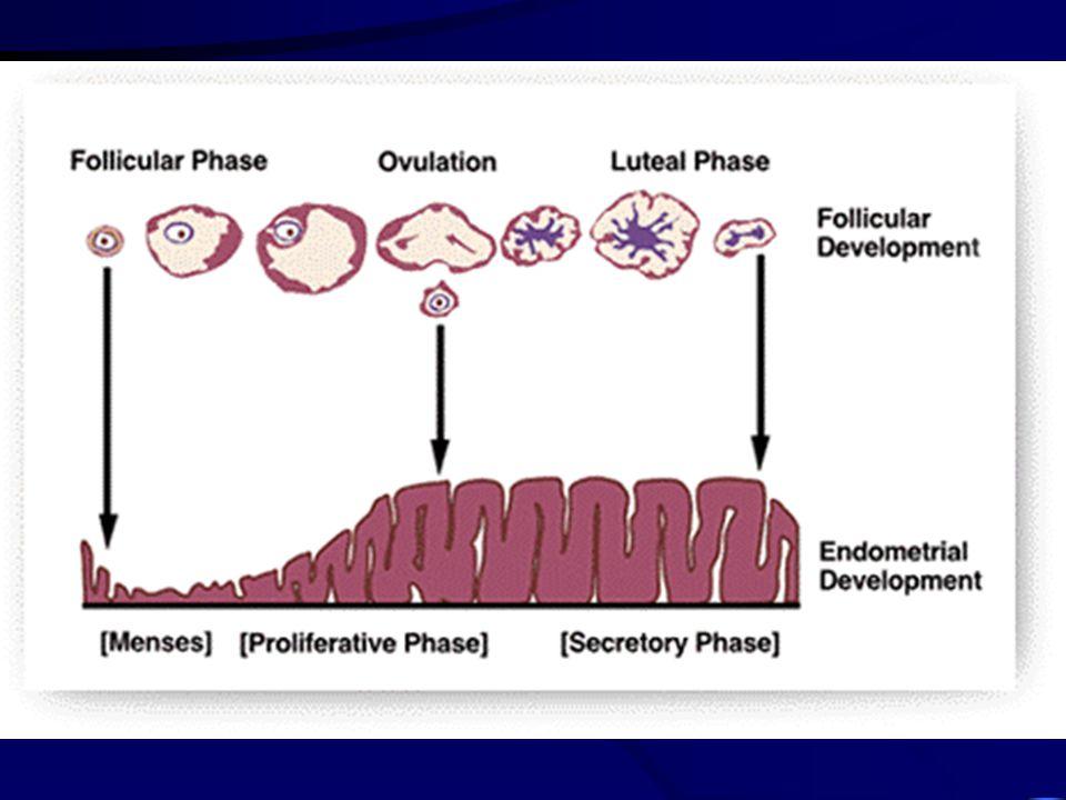 Fáze ischemická kontrakce arteriol - ischemie str. funct.