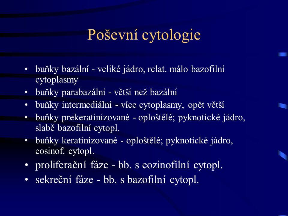Poševní cytologie proliferační fáze - bb. s eozinofilní cytopl.