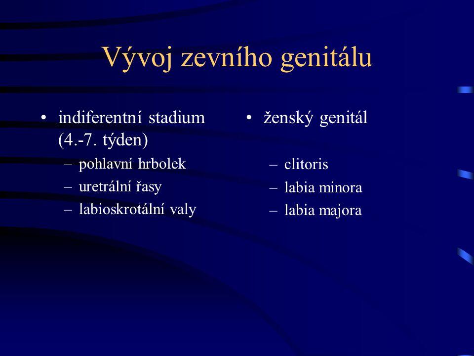 Vývoj zevního genitálu