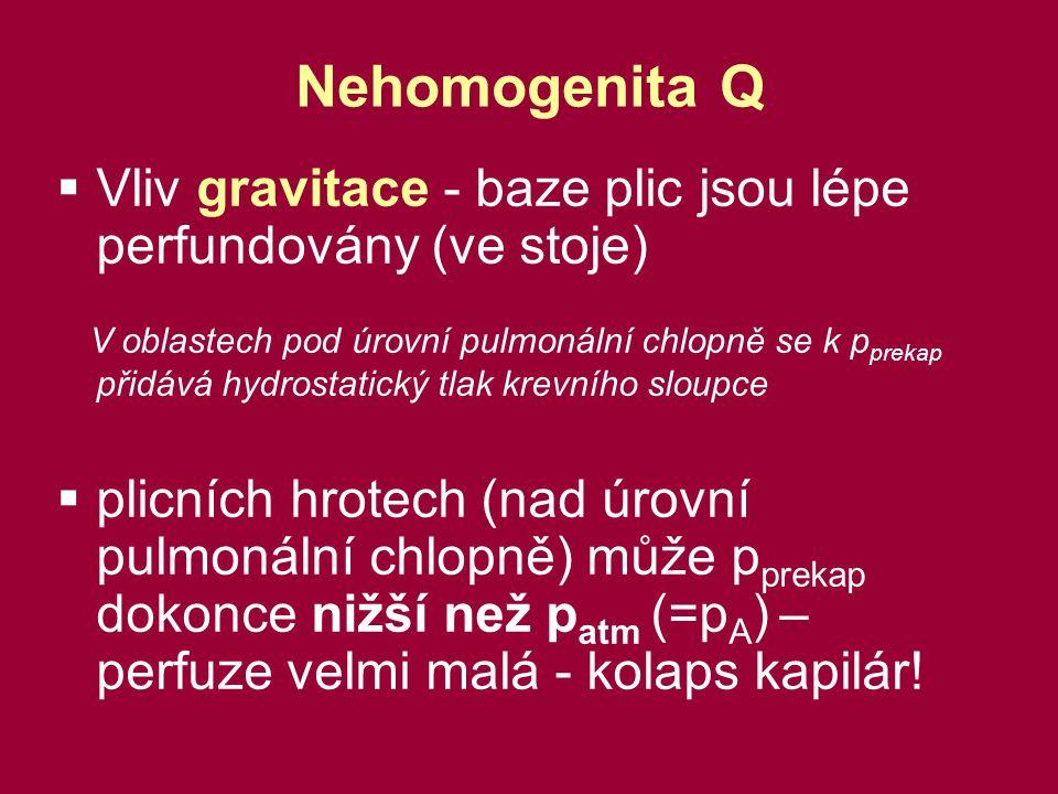 Nehomogenita Q Vliv gravitace - baze plic jsou lépe perfundovány (ve stoje)