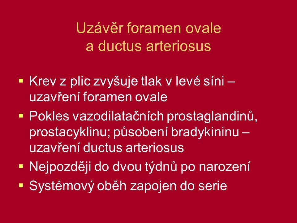 Uzávěr foramen ovale a ductus arteriosus