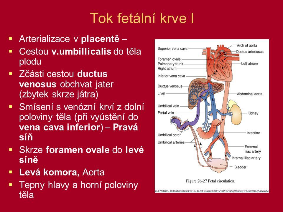 Tok fetální krve I Arterializace v placentě –