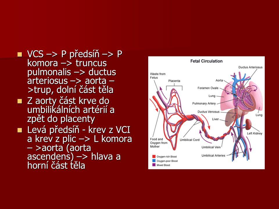 VCS –> P předsíň –> P komora –> truncus pulmonalis –> ductus arteriosus –> aorta – >trup, dolní část těla