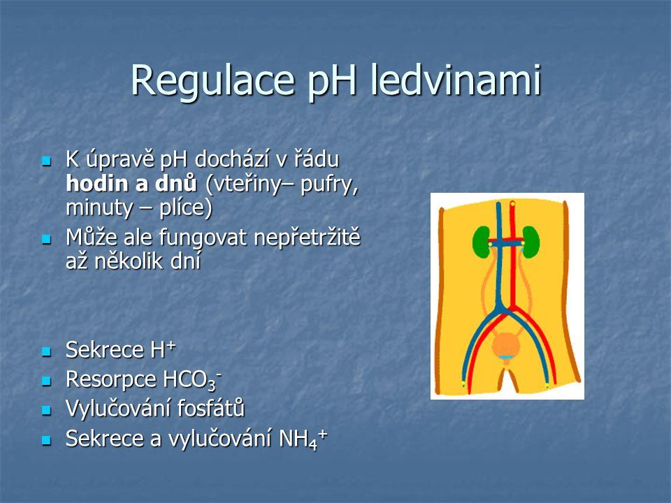 Regulace pH ledvinami K úpravě pH dochází v řádu hodin a dnů (vteřiny– pufry, minuty – plíce) Může ale fungovat nepřetržitě až několik dní.