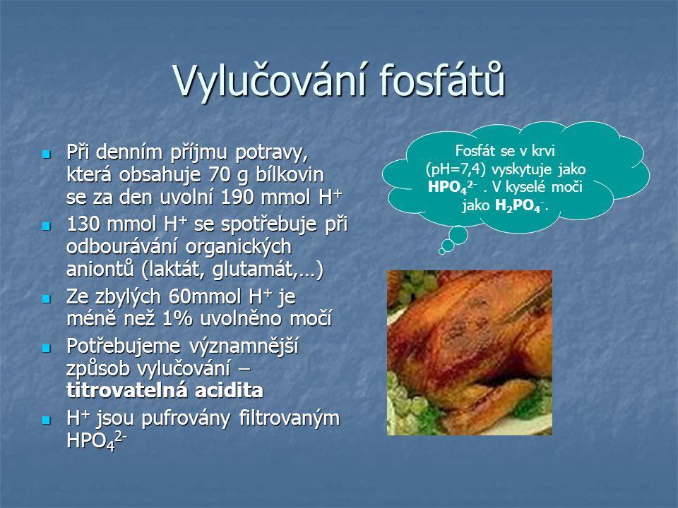 Vylučování fosfátů Při denním příjmu potravy, která obsahuje 70 g bílkovin se za den uvolní 190 mmol H+
