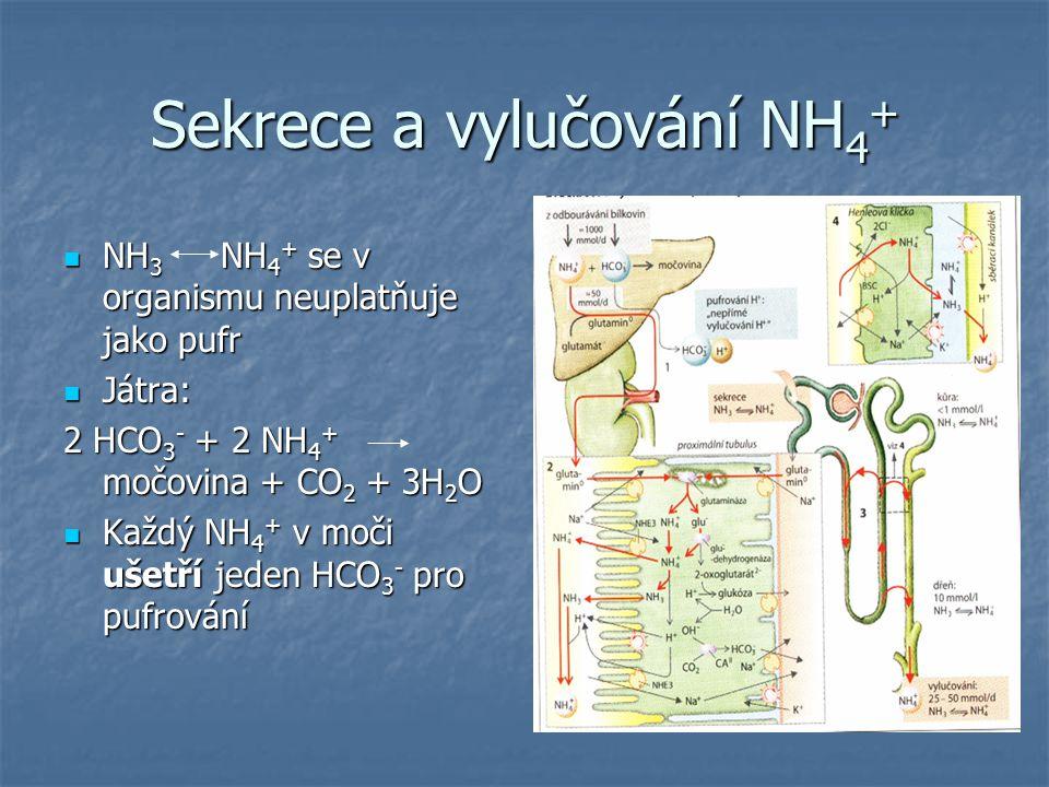 Sekrece a vylučování NH4+