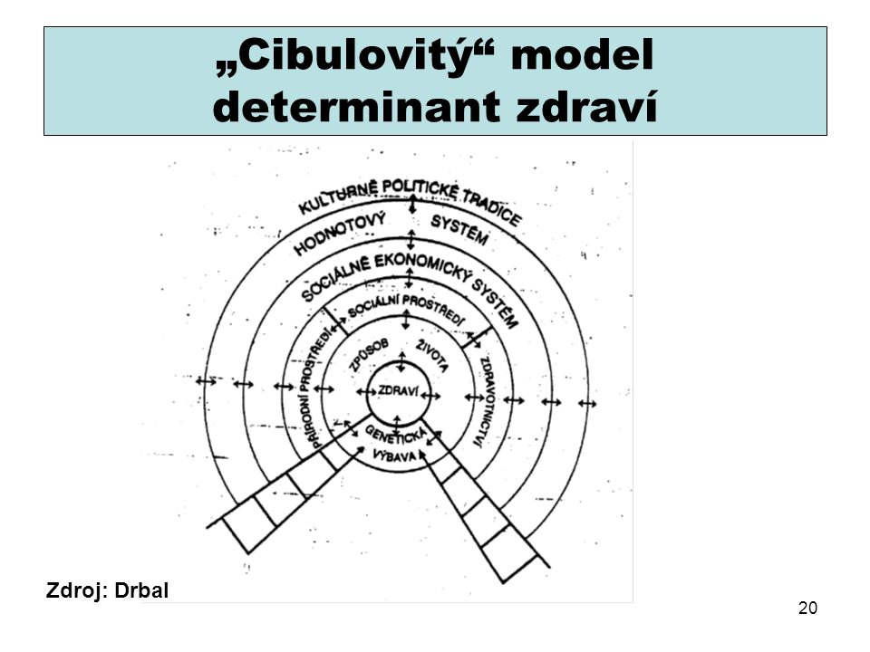 """Cibulovitý model determinant zdraví"