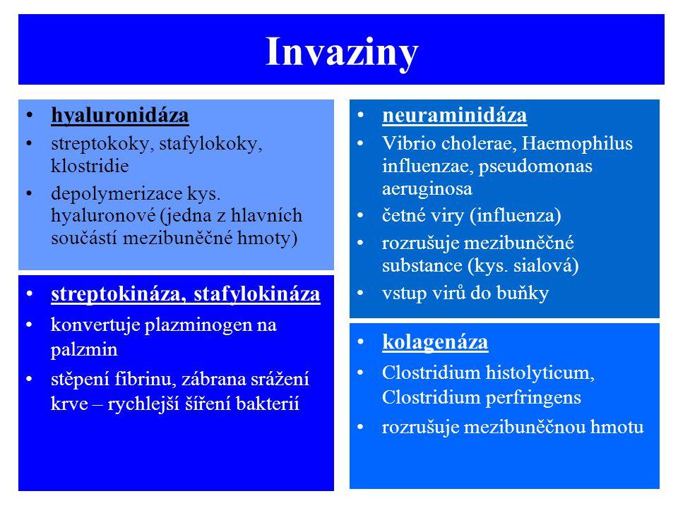Invaziny hyaluronidáza neuraminidáza streptokináza, stafylokináza