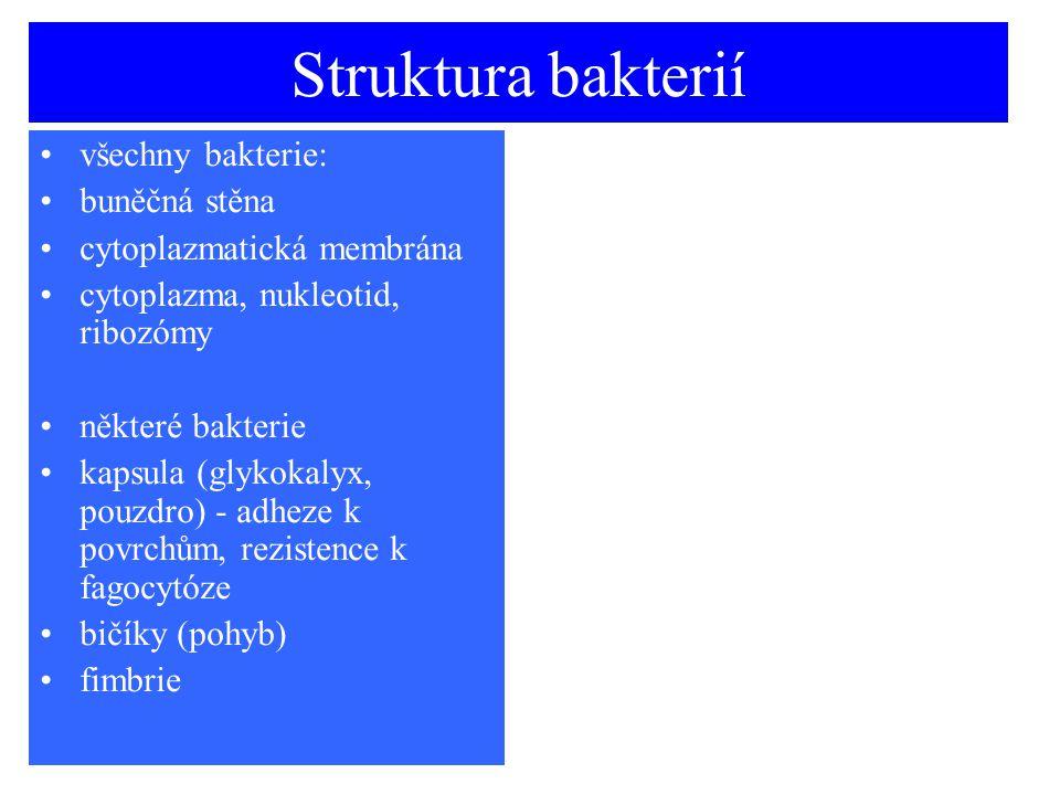 Struktura bakterií všechny bakterie: buněčná stěna