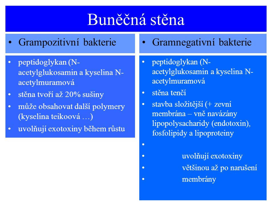 Buněčná stěna Grampozitivní bakterie Gramnegativní bakterie