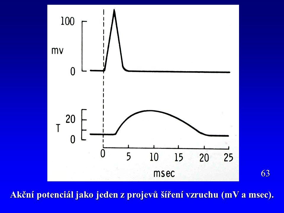 Akční potenciál jako jeden z projevů šíření vzruchu (mV a msec).