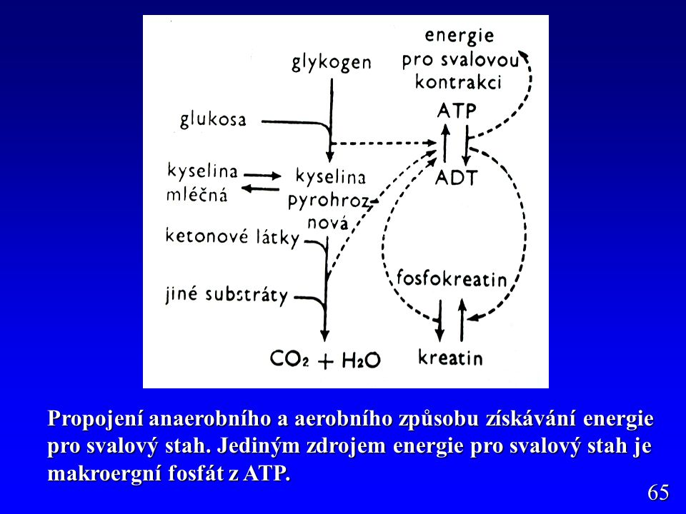 Vysvětlit co je anaerobní a co aerobní