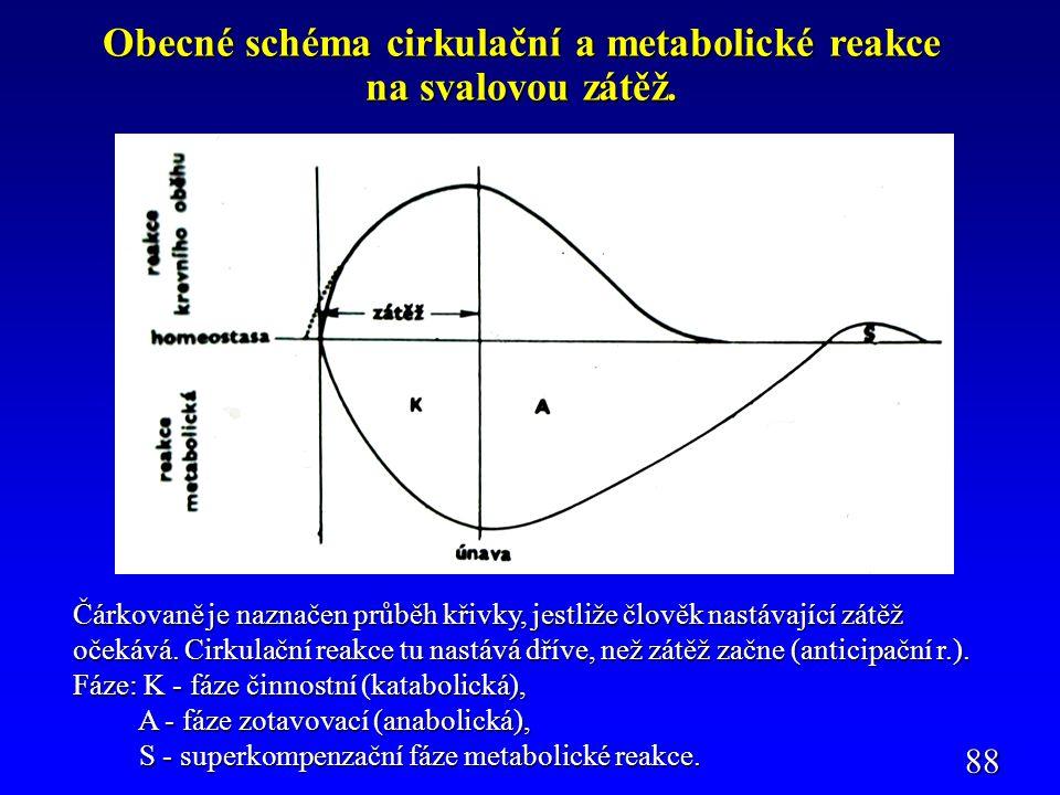 Obecné schéma cirkulační a metabolické reakce na svalovou zátěž.