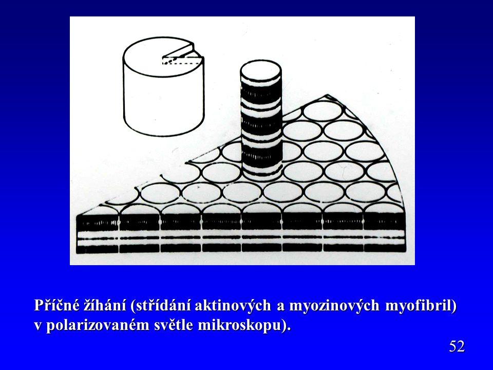 Příčné žíhání (střídání aktinových a myozinových myofibril) v polarizovaném světle mikroskopu).