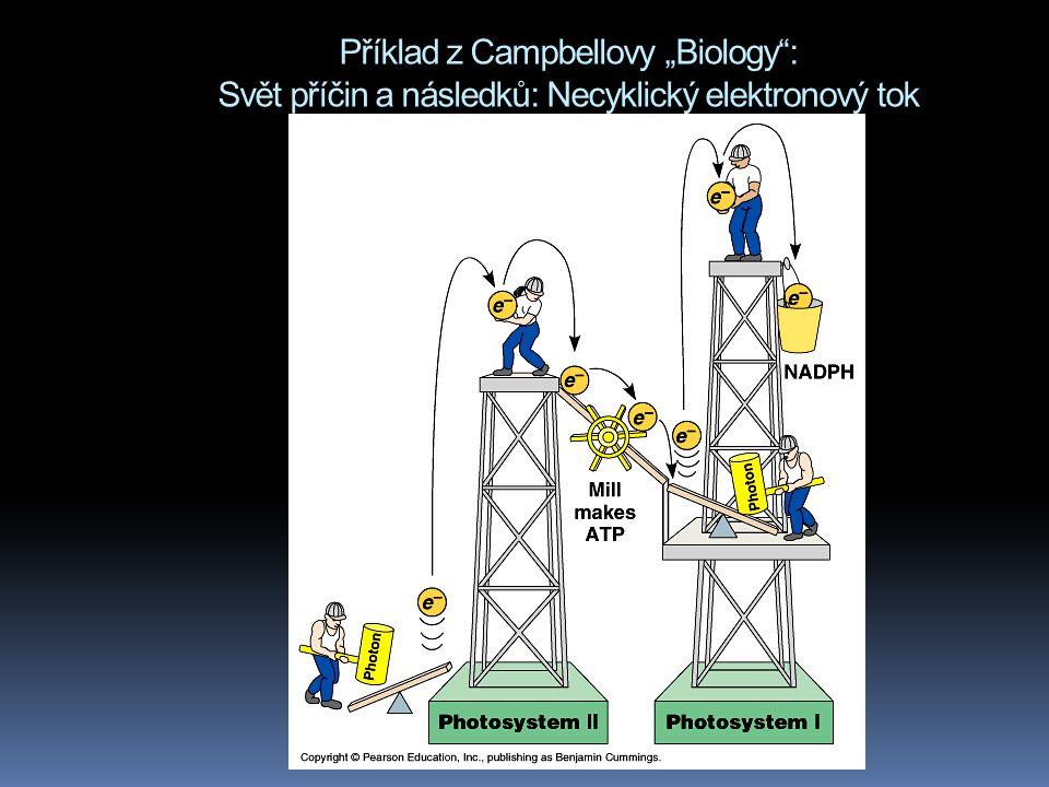 """Příklad z Campbellovy """"Biology : Svět příčin a následků: Necyklický elektronový tok"""
