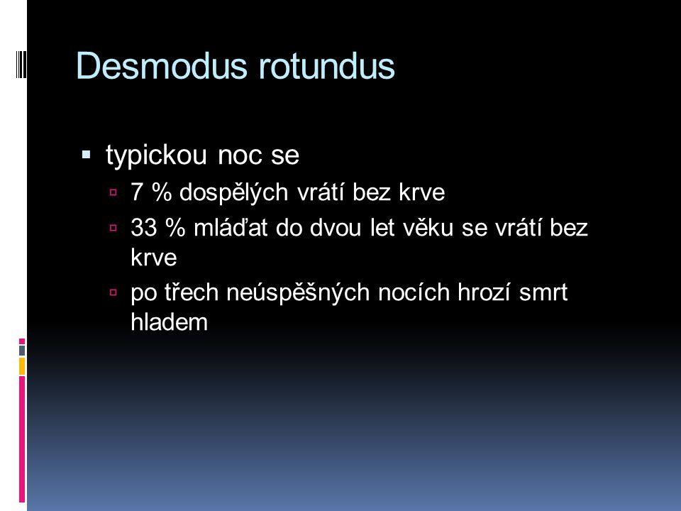 Desmodus rotundus typickou noc se 7 % dospělých vrátí bez krve