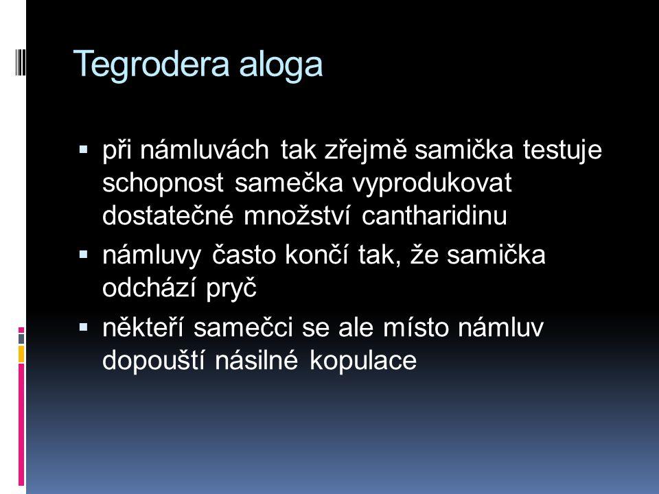 Tegrodera aloga při námluvách tak zřejmě samička testuje schopnost samečka vyprodukovat dostatečné množství cantharidinu.