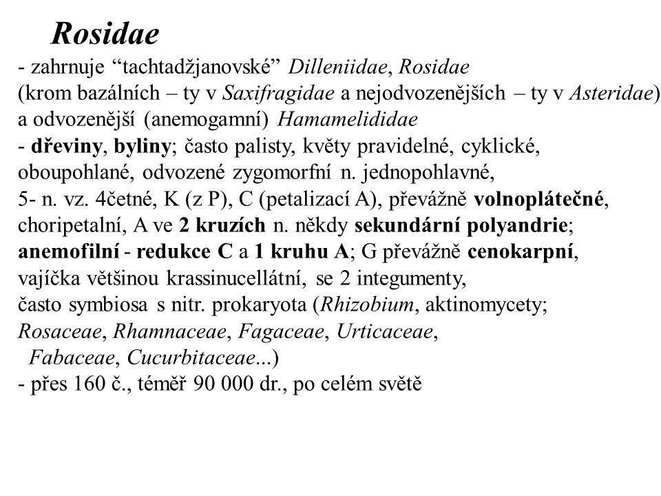 Rosidae - zahrnuje tachtadžjanovské Dilleniidae, Rosidae