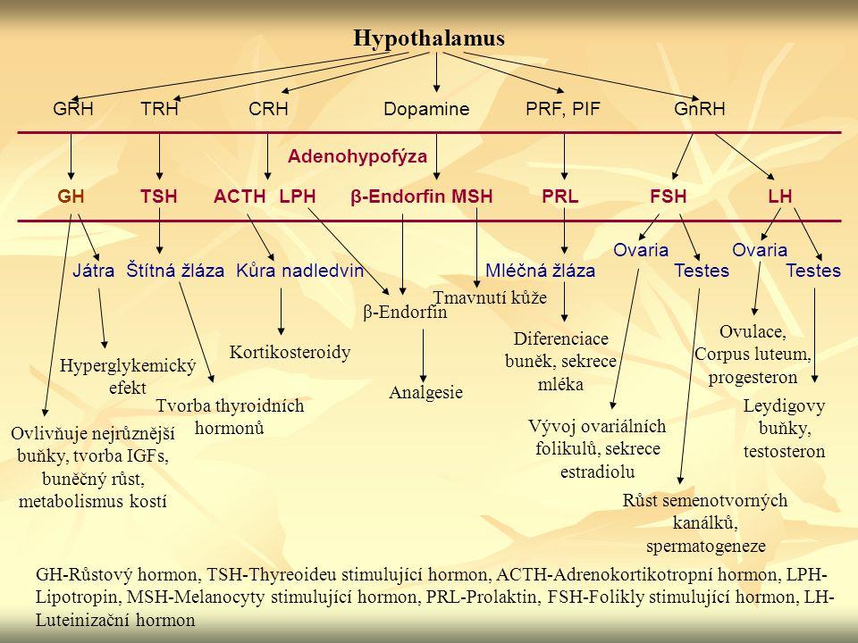 Hypothalamus GRH TRH CRH Dopamine PRF, PIF GnRH Adenohypofýza GH TSH