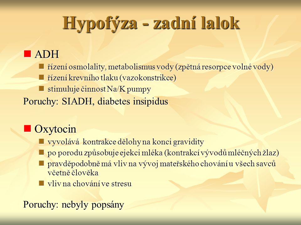 Hypofýza - zadní lalok ADH Oxytocin Poruchy: SIADH, diabetes insipidus