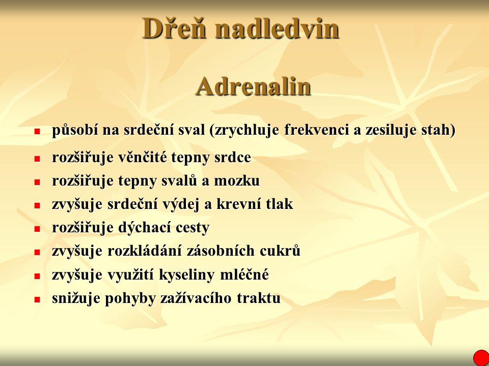 Dřeň nadledvin Adrenalin
