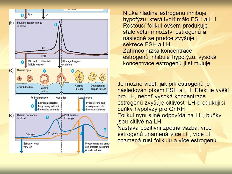 Nízká hladina estrogenu inhibuje hypofýzu, která tvoří málo FSH a LH