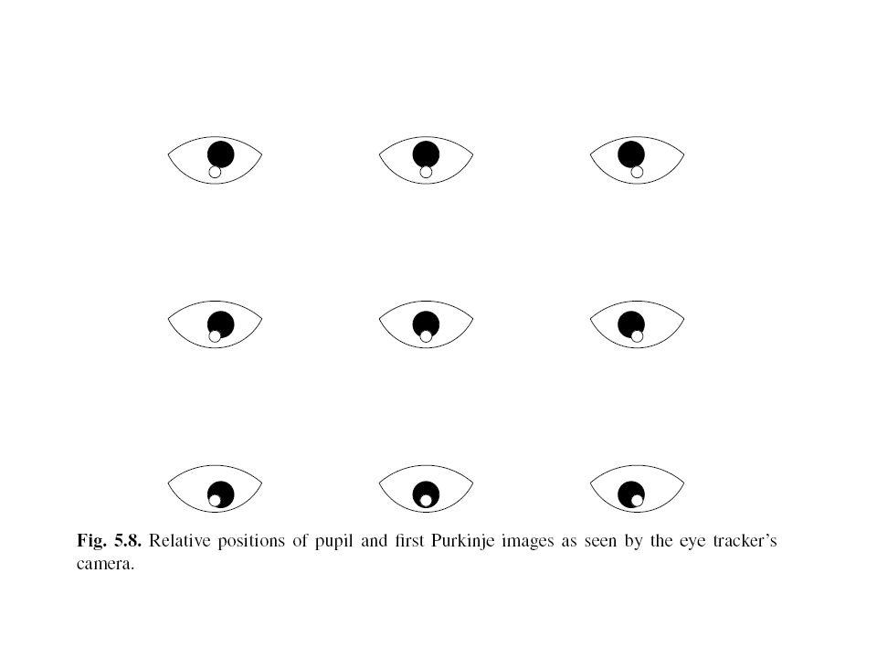 Left eye rotate to fixate nine points during calibration.