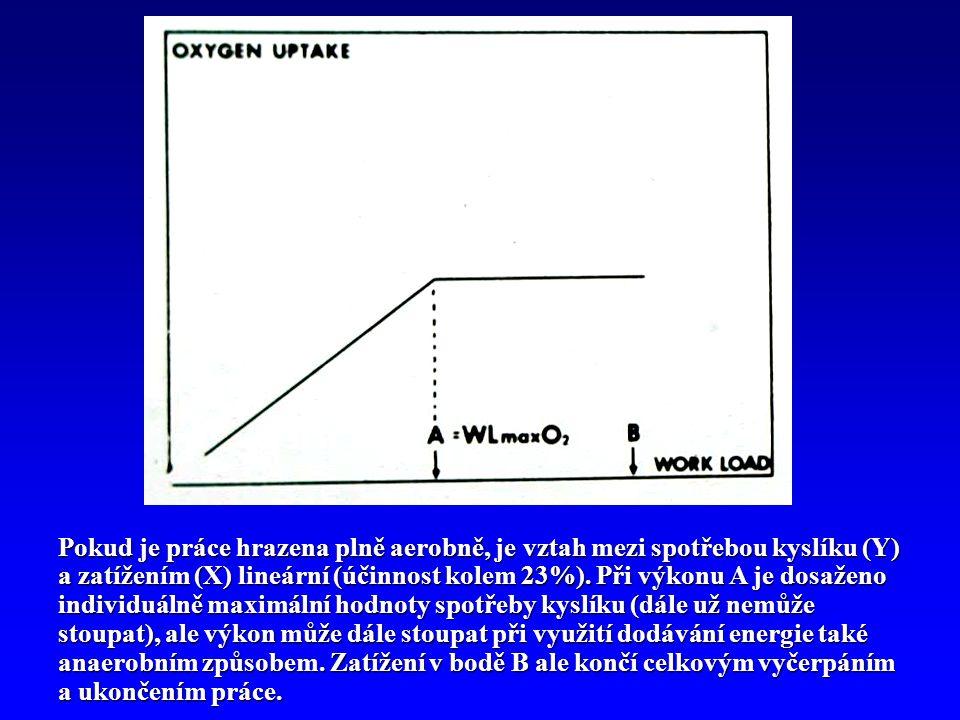 Pokud je práce hrazena plně aerobně, je vztah mezi spotřebou kyslíku (Y) a zatížením (X) lineární (účinnost kolem 23%).