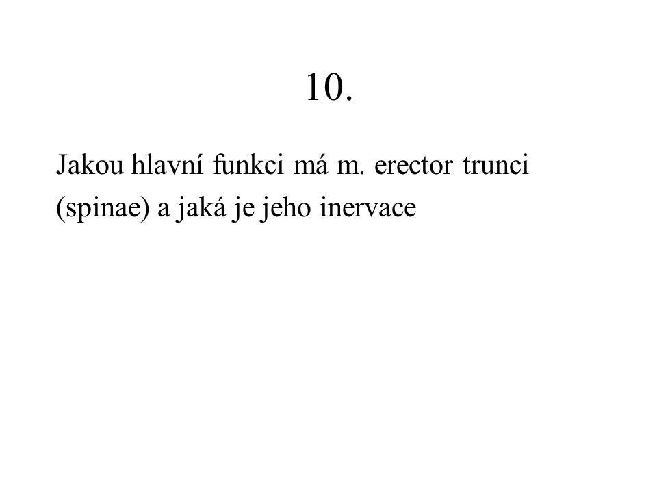 10. Jakou hlavní funkci má m. erector trunci