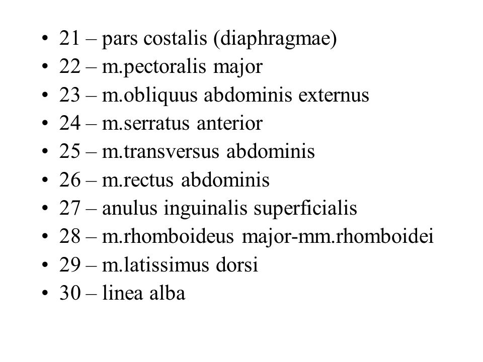 21 – pars costalis (diaphragmae)